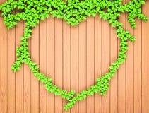 Geformter Efeu des Herzens auf hölzerner Wand stockbild