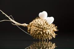 Geformter weißer Achat des Herzens auf Trockenfrüchten der wild wachsenden Pflanze Stockbilder