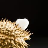 Geformter weißer Achat des Herzens auf Trockenfrüchten der wild wachsenden Pflanze Lizenzfreies Stockfoto