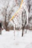 Gefrieren Sie auf den Niederlassungen von Fliedern im Winter Stockbilder