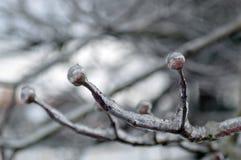 Gefrieren Sie umfaßten Baum-Zweig Lizenzfreie Stockbilder