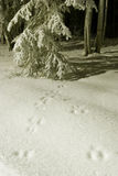 GEFROREN: Spuren im Schnee Lizenzfreie Stockfotografie
