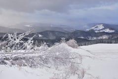 Gefroren treen im Berg Stockfoto
