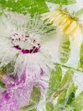 Gefrorene Abstraktion einer Gartennelkenblume Stockbild