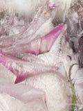 Gefrorene Abstraktion mit Blumenrosen Stockfoto