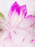 Gefrorene Abstraktion mit rosa Blume Stockbilder