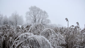 Gefrorene Anlagen bedeckt mit Frost Stockbild