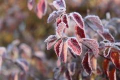 Gefrorene Anlagen Die ersten Fröste, das kühle Wetter, gefrorene der Wasser, Frost und Reif Makroschuß Früher Winterhintergrund Lizenzfreie Stockbilder
