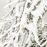 Gefrorene Anlagen im Schnee vor einem Blizzard Stockfoto