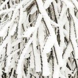 Gefrorene Anlagen im Schnee vor einem Blizzard Stockfotos