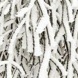 Gefrorene Anlagen im Schnee vor einem Blizzard Stockbilder