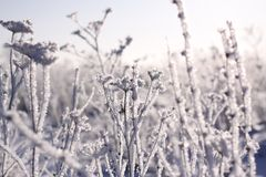 Gefrorene Anlagen im Winter Stockbild