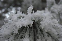 Gefrorene Bäume Stockfotografie