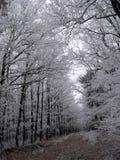 Gefrorene Bäume Stockfotos