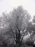 Gefrorene Bäume Stockbild