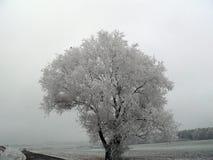 Gefrorene Bäume Lizenzfreie Stockfotografie