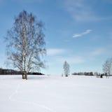 Gefrorene Bäume auf dem Gebiet Stockfoto