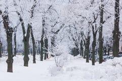 Gefrorene Bäume auf Stadtweg Lizenzfreie Stockbilder