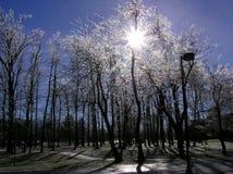 Gefrorene Bäume bedeckt mit Eis während der Winterzeit stockbild