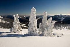 Gefrorene Bäume in den Winterbergen Stockbilder
