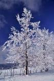 Gefrorene Bäume in der winterlichen Landschaft Stockbild