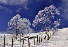 Gefrorene Bäume in der winterlichen Landschaft Lizenzfreies Stockbild
