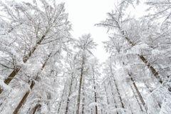 Gefrorene Bäume in der Winterzeit umfaßt mit Hoarfrost Stockfotos