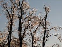 Gefrorene Bäume, die hoch stehen Stockfoto