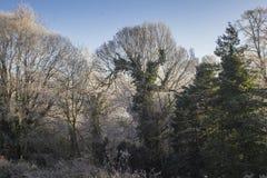 Gefrorene Bäume an einem kalten Wintertag lizenzfreie stockbilder
