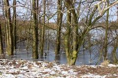 Gefrorene Bäume im See Lizenzfreies Stockbild