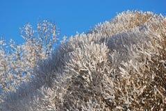 Gefrorene Bäume im Winter Stockfotos