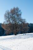 Gefrorene Bäume im Winterwald Stockbilder
