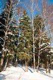 Gefrorene Bäume im Winterwald Lizenzfreie Stockbilder