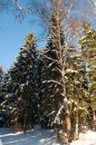 Gefrorene Bäume im Winterwald Lizenzfreie Stockfotos