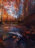 Gefrorene Bäume, Kunst des Winters stockfoto