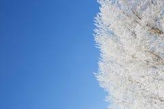 Gefrorene Bäume und Niederlassungen Stockfotos