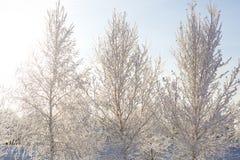 Gefrorene Bäume und Niederlassungen Lizenzfreies Stockbild