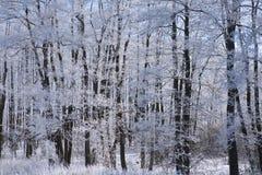 Gefrorene Bäume und Niederlassungen Stockfoto