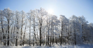 Gefrorene Bäume und Niederlassungen Lizenzfreie Stockfotografie