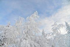 Gefrorene Bäume und Niederlassungen umfasst durch Schnee Schöne weiße Winterlandschaft Blauer Himmel am Hintergrund Lizenzfreie Stockfotos