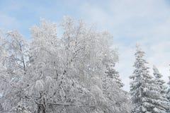 Gefrorene Bäume und Niederlassungen umfasst durch Schnee Schöne weiße Winterlandschaft Blauer Himmel am Hintergrund Stockfotos