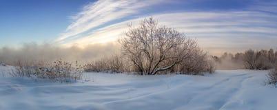 Gefrorene Büsche auf dem Ufer von nebeligem See im Winter, Russland, Ural Stockfoto