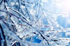 Gefrorene Baumaste mit blauen Eiszapfen Stockbilder