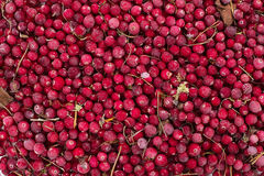 Gefrorene Beerenpreiselbeeren Stockbild