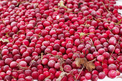 Gefrorene Beerenpreiselbeeren Lizenzfreies Stockbild