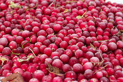 Gefrorene Beerenpreiselbeeren Lizenzfreie Stockbilder