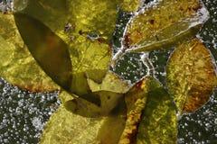 Gefrorene Blätter Stockfotos