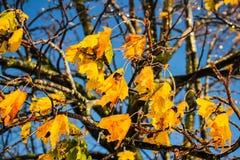 Gefrorene Blätter Stockfoto