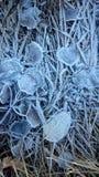 Gefrorene Blätter Stockbild