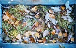 Gefrorene Blätter im Holzrahmen Stockbilder